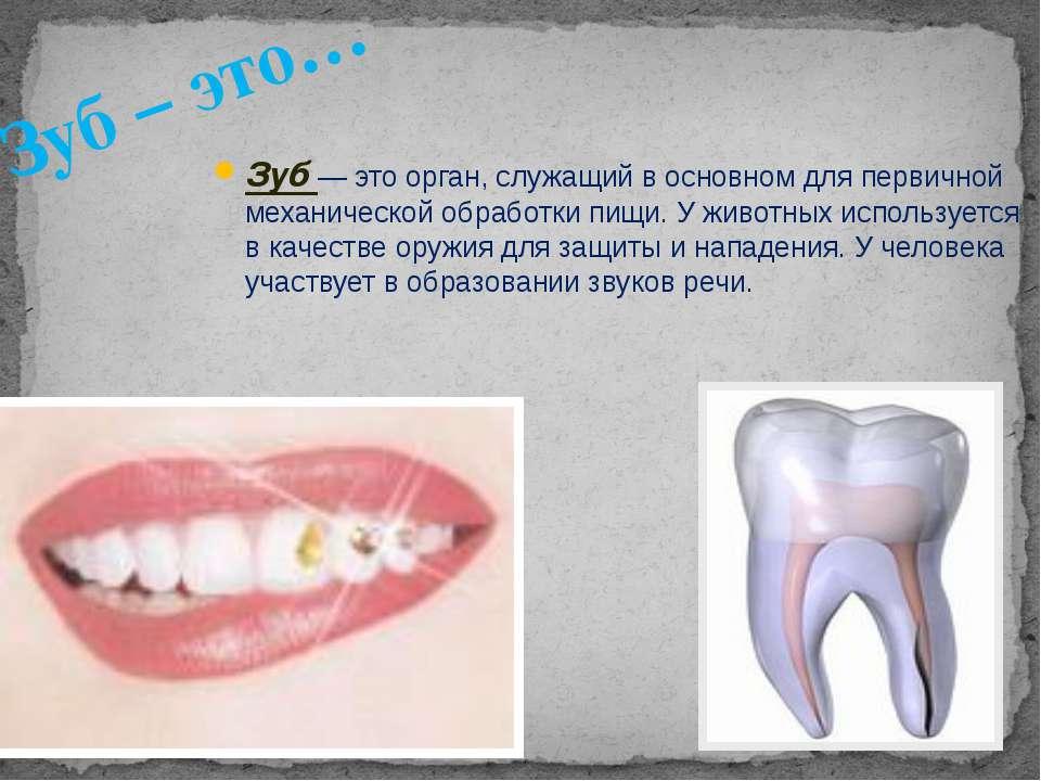 Зуб— это орган, служащий в основном для первичной механической обработки пищ...