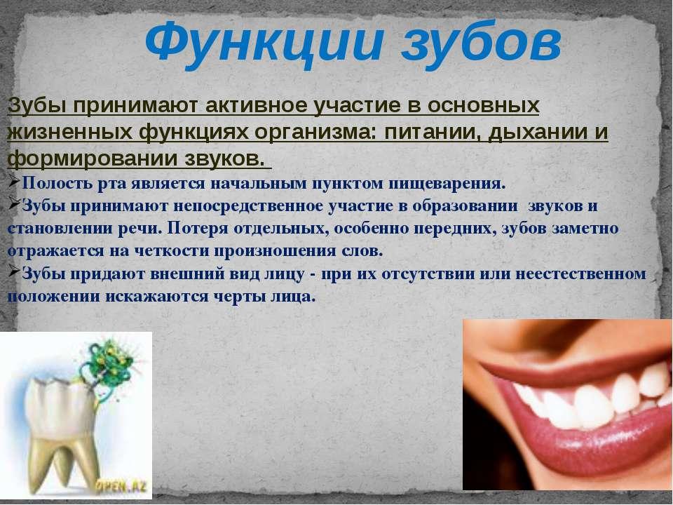 Функции зубов Зубы принимают активное участие в основных жизненных функциях о...