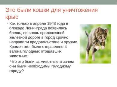 Это были кошки для уничтожения крыс Как только в апреле 1943 года в блокаде Л...