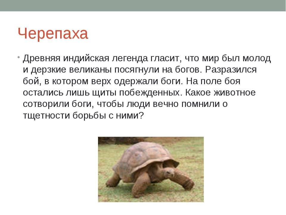 Черепаха Древняя индийская легенда гласит, что мир был молод и дерзкие велика...