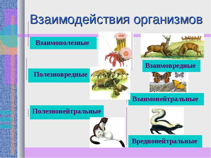 Взаимодействия организмов Взаимополезные Полезновредные Полезнонейтральные Вз...