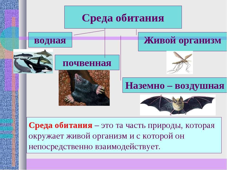 Среда обитания почвенная Наземно – воздушная водная Живой организм Среда обит...