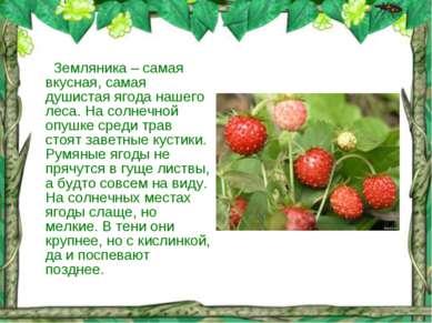 Земляника – самая вкусная, самая душистая ягода нашего леса. На солнечной опу...