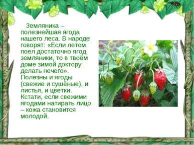 Земляника – полезнейшая ягода нашего леса. В народе говорят: «Если летом поел...