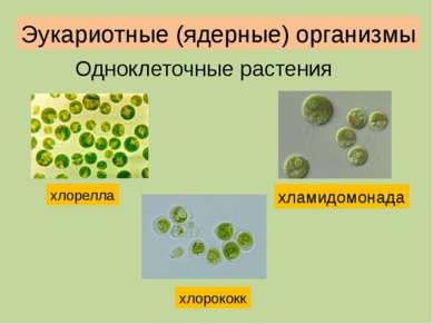 Клетки вольвокса имеют грушевидную форму и снабжены двумя жгутиками. Основная...