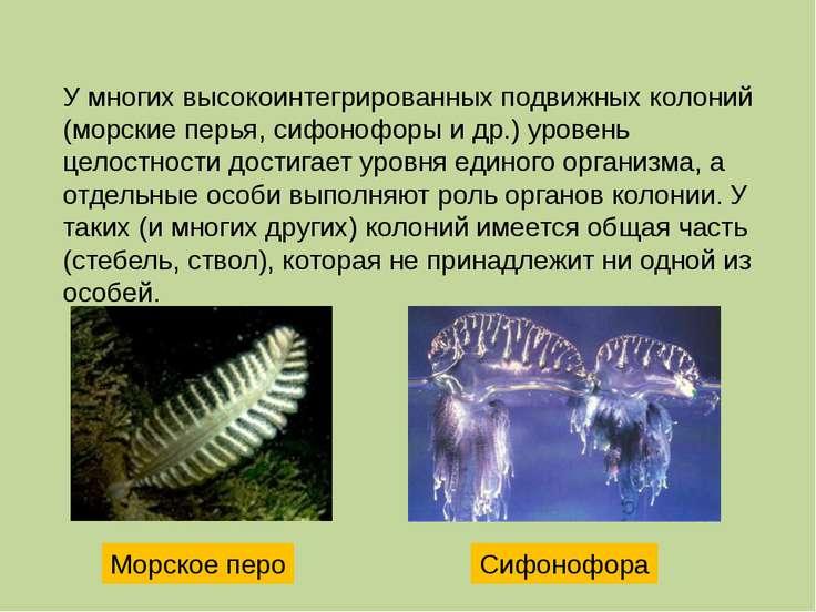 http://images.sciencedaily.com/2004/06/040611080718.jpg http://npu.edu.ua/!e-...