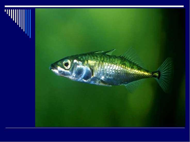 Уцелела одна только Рыбка, да и та Малютка-Колюшка. Хитрая Плавала рядом Плав...