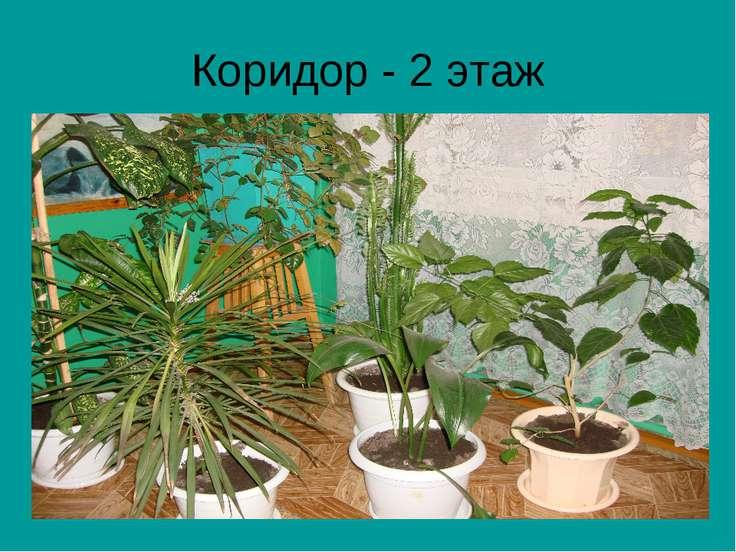 Коридор - 2 этаж