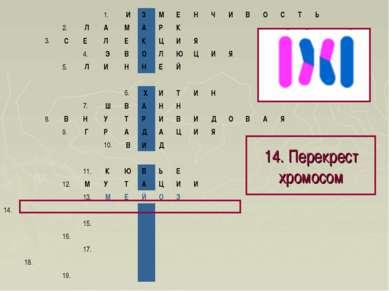 14. Перекрест хромосом 1. И З М Е Н Ч И В О С Т Ь 2. Л А М А ...