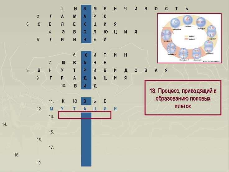 13. Процесс, приводящий к образованию половых клеток 1. И З М Е Н Ч И ...