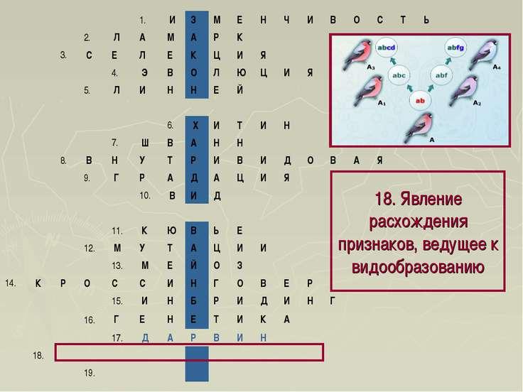 18. Явление расхождения признаков, ведущее к видообразованию 1. И З М Е Н...