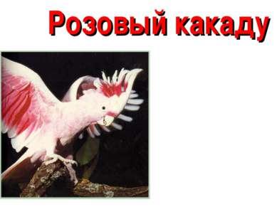 Розовый какаду