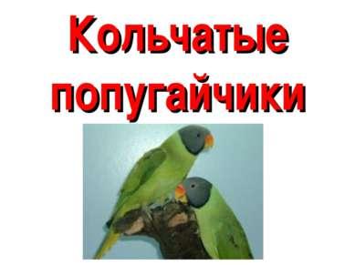 Кольчатые попугайчики
