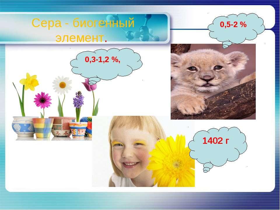Сера - биогенный элемент. 0,3-1,2 %, 0,5-2 % 1402 г