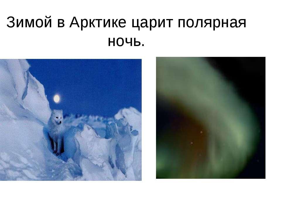 Зимой в Арктике царит полярная ночь.