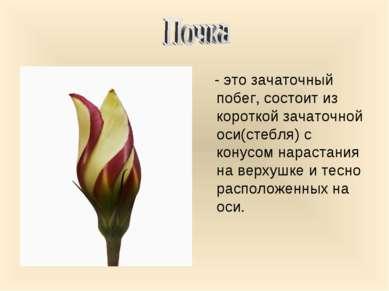 - это зачаточный побег, состоит из короткой зачаточной оси(стебля) с конусом ...