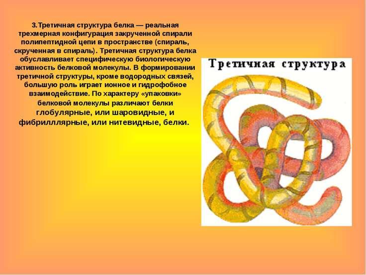 3.Третичная структура белка — реальная трехмерная конфигурация закрученной сп...