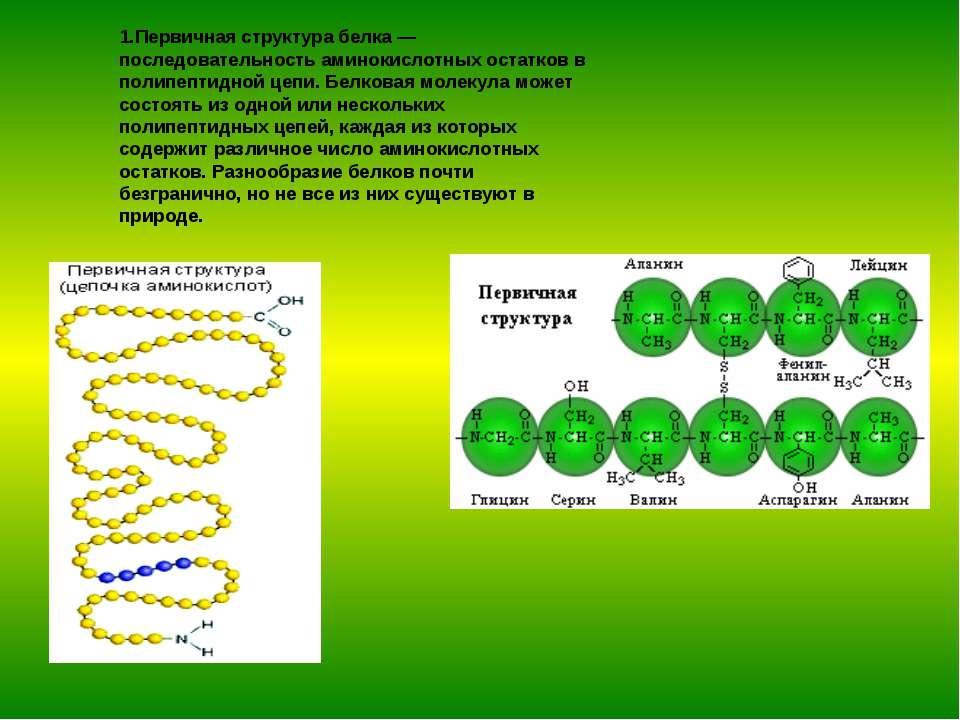 1.Первичная структура белка — последовательность аминокислотных остатков в по...
