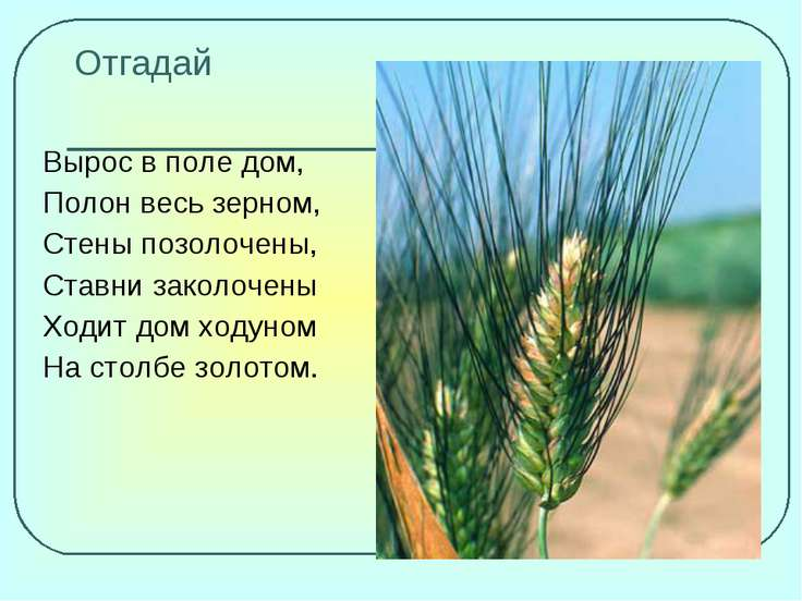 Отгадай Вырос в поле дом, Полон весь зерном, Стены позолочены, Ставни заколоч...