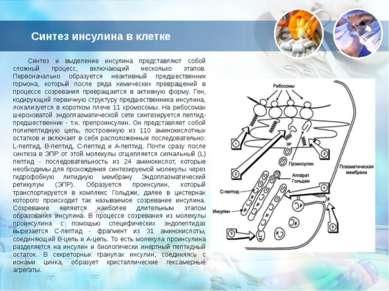 Синтез инсулина в клетке Синтез и выделение инсулина представляют собой сложн...