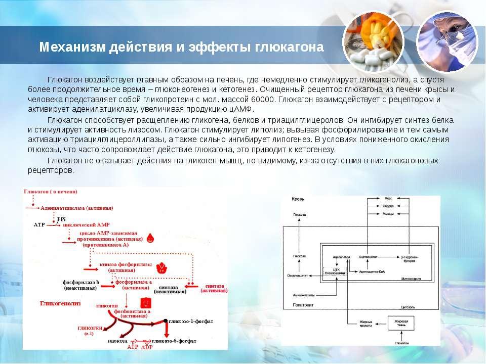 Механизм действия и эффекты глюкагона Глюкагон воздействует главным образом н...