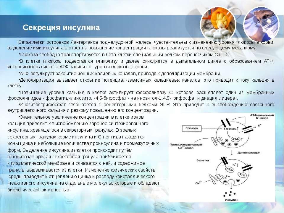 Секреция инсулина Бета-клетки островков Лангерганса поджелудочной железы чувс...
