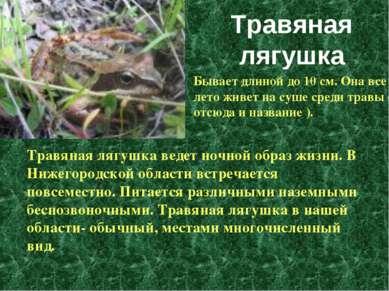 Травяная лягушка ведет ночной образ жизни. В Нижегородской области встречаетс...