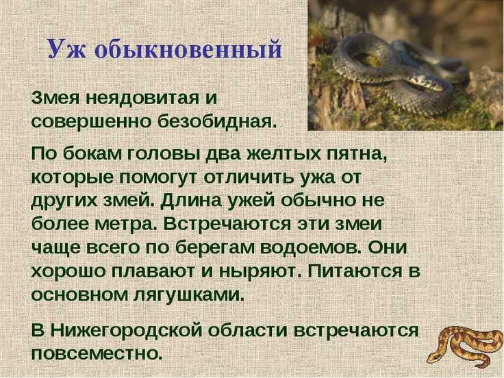 По бокам головы два желтых пятна, которые помогут отличить ужа от других змей...