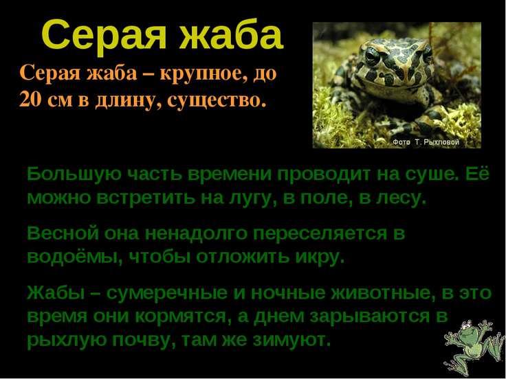 Серая жаба Большую часть времени проводит на суше. Её можно встретить на лугу...