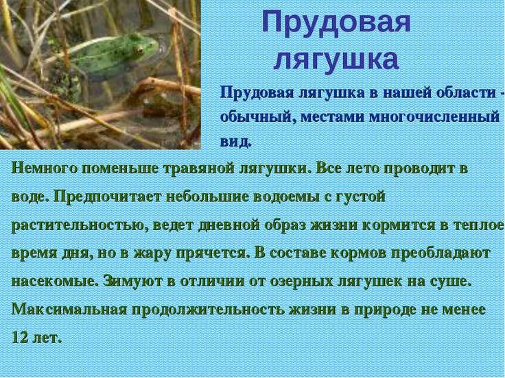 Прудовая лягушка Немного поменьше травяной лягушки. Все лето проводит в воде....