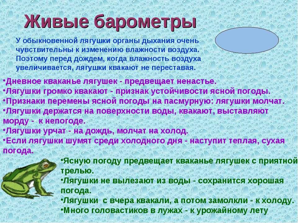 Живые барометры У обыкновенной лягушки органы дыхания очень чувствительны к и...