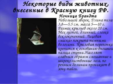 Некоторые виды животных, внесенные в Красную книгу РФ. Ночница Брандта Неболь...
