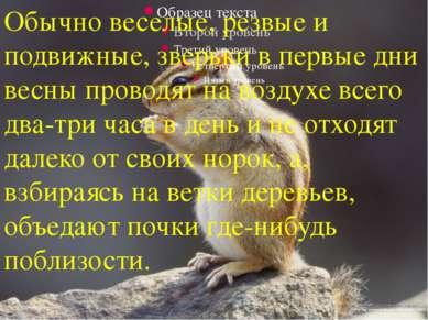 Обычно веселые, резвые и подвижные, зверьки в первые дни весны проводят на во...