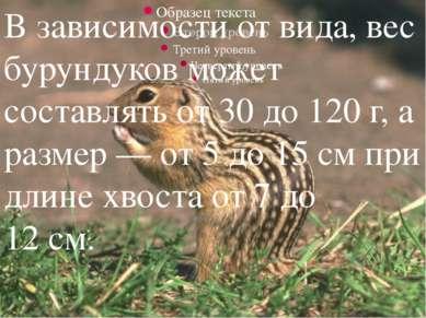 В зависимости от вида, вес бурундуков может составлять от 30 до 120 г, а разм...
