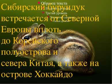 Сибирский бурундук встречается отСеверной Европывплоть доКорейского полуос...