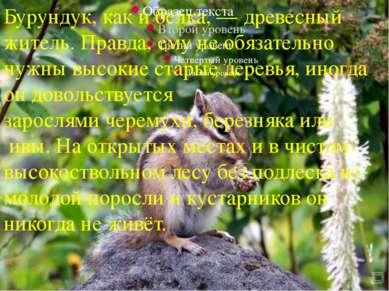Бурундук, как ибелка,— древесный житель. Правда, ему не обязательно нужны в...