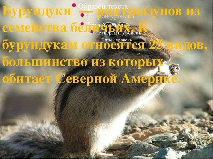 Бурундуки— родгрызуновиз семействабеличьих. К бурундукам относятся 25 ви...