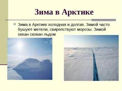 Зима в Арктике Зима в Арктике холодная и долгая. Зимой часто бушуют метели, с...