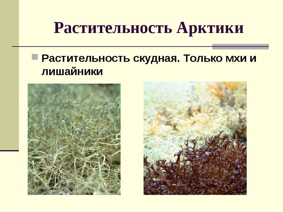 Растительность Арктики Растительность скудная. Только мхи и лишайники