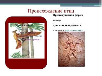 Промежуточная форма между пресмыкающимися и птицами археоптерикс Происхождени...