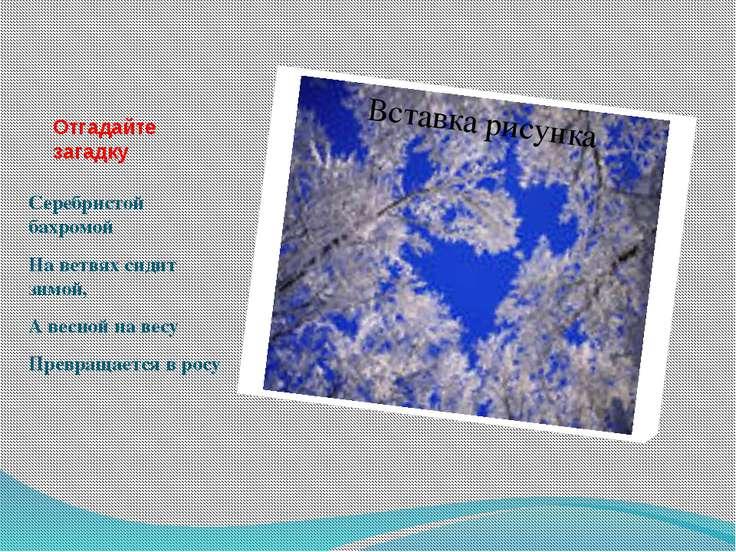 Отгадайте загадку Серебристой бахромой На ветвях сидит зимой, А весной на вес...