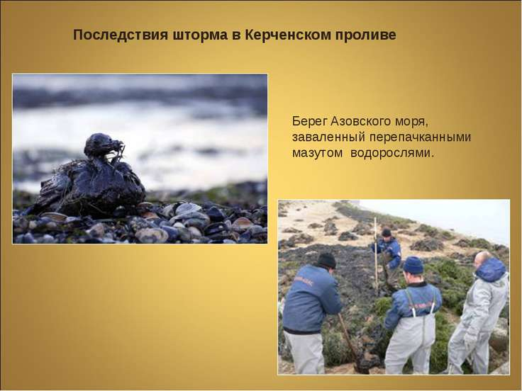 Последствия шторма в Керченском проливе Берег Азовского моря, заваленный пере...