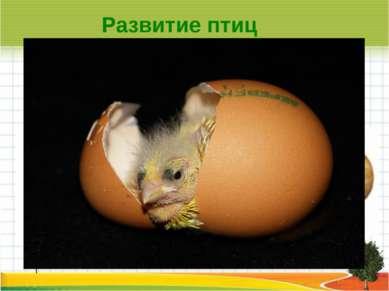 l Развитие птиц Яйца птиц разнообразны по окраске и по размерам.