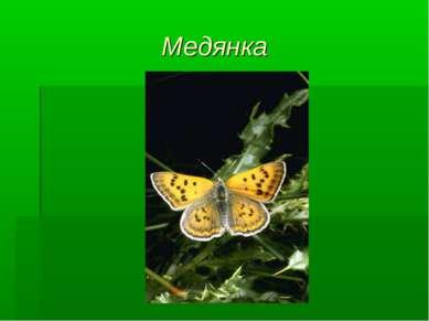 Медянка