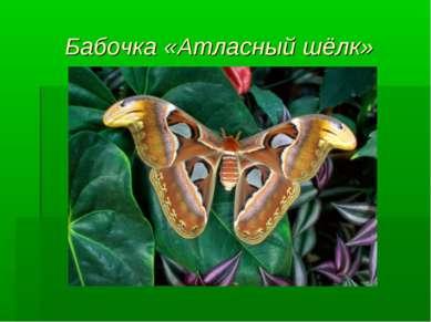 Бабочка «Атласный шёлк»