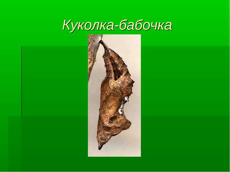 Куколка-бабочка