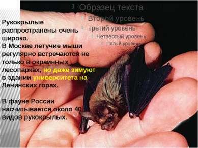 Рукокрылые распространены очень широко. В Москве летучие мыши регулярно встре...