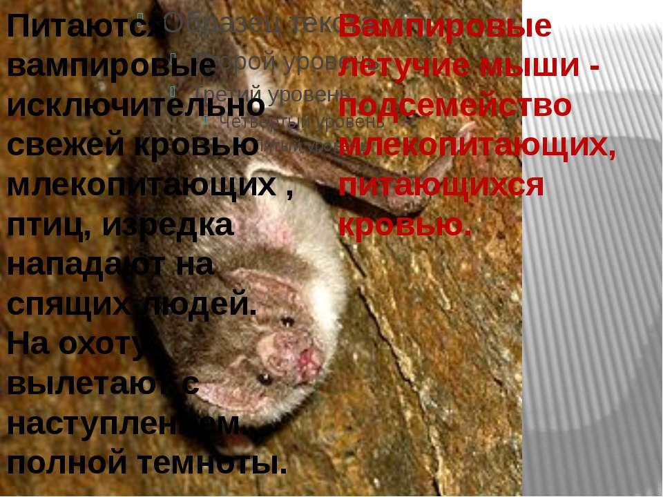 Вампировые летучие мыши - подсемейство млекопитающих, питающихся кровью. Пита...