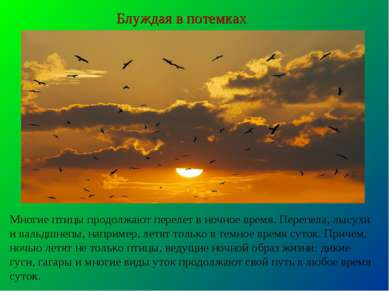 Блуждая в потемках Многие птицы продолжают перелет в ночное время. Перепела, ...