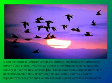 А как же летят в ночных условиях птички, привыкшие к дневному свету? Дело в т...